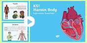 Identify, name, draw and label the basic parts of the human body