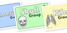 Bones Of The Body Class Group Signs
