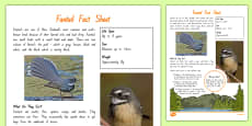 New Zealand Native Birds Fantail Fact Sheet