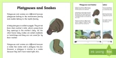 Platypuses and Snakes Information Report Writing Sample