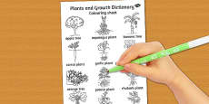 Plants and Growth Dictionary Colouring Sheet