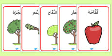Apple Tree Life Cycle Growth Posters Arabic