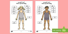 Parts of the Body Senses Labelling Activity Sheet Arabic/English
