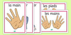 French Actions Display Posters