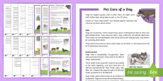 KS2 Pet Care of a Dog Differentiated Reading Comprehension Activity