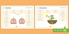 AQA Biology 4.4 Bioenergetics Word Mat