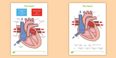 The Heart Labelling Diagrams