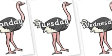Days of the Week on Ostriches