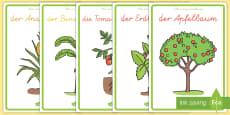 Obst- und Gemüsepflanzen Poster für die Klassenraumgestaltung