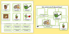 Plant Growth Sequencing Activity German
