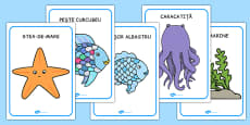 Movement Activity Picture Cards to Support Teaching on The Rainbow Fish Romanian