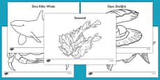 New Zealand Under the Sea Colouring Pages