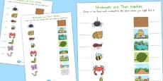 Australia - Minibeast and Their Habitats Activity Sheet