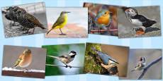 Birds Photo Clip Art Pack