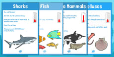 Under the Sea Animal Groups Display Posters