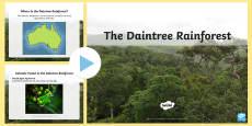The Daintree Rainforest PowerPoint