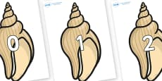 Numbers 0-31 on Conch Shells