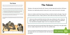 Falcon Fact File