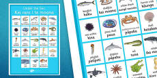 Under the Sea Vocabulary Poster Te Reo Māori