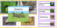 Australian Insects pack