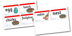 Robin Life Cycle Word Cards