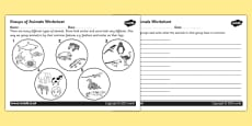 Animal Groups Activity Sheet