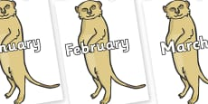 Months of the Year on Meerkats