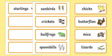 Story Word Cards to Support Teaching on Handa's Hen