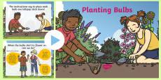 Planting Bulbs Numeracy PowerPoint