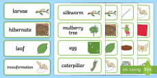 * NEW * F-2 Silkworms Word Cards