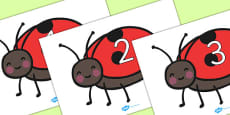 Numbers 0-50 on Ladybird to Support Teaching on What the Ladybird Heard