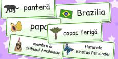 Rainforest Word Cards Romanian
