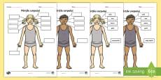 Părțile corpului și cele 5 simțuri Fișă de lucru