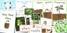 Australia - Bean Life Cycle Resource Pack