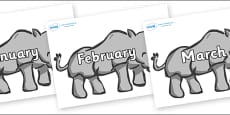 Months of the Year on Rhinos