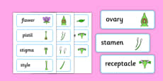 Parts of a Flower Word Cards