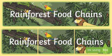 Rainforest Food Chains Display Banner