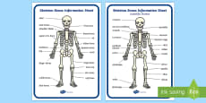 Skeleton Information Sheet to Support Teaching on Funny Bones