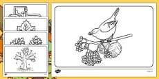 Autumn Colouring Sheets