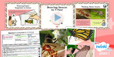 Art: Insects: Drawing Insects in Colour LKS2 Lesson Pack 2