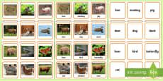 * NEW * Animals Photo Matching Cards