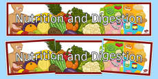 Nutrition and Digestion Display Banner