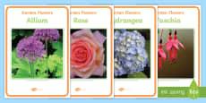Garden Flower Photo Display Posters