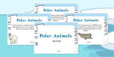 Amazing Polar Animals Display Fact Cards