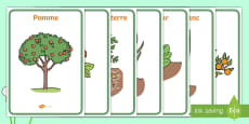 Affiches : les fruits et légumes