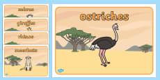 Editable Class Group Signs (Safari Animals)