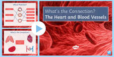 The Heart What's the Connection? PowerPoint