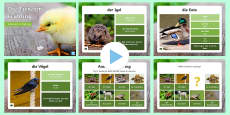 Spring Animals PowerPoint German