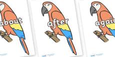 KS1 Keywords on Parrots