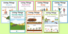 Characteristics of Living Things A4 Poster Set